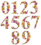 номер изолированный цветком Стоковое фото RF