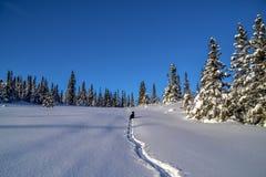 норвежская зима Стоковое Изображение RF