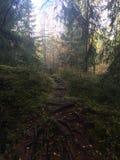 норвежские древесины Стоковое Изображение RF