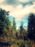 норвежские древесины Стоковое фото RF