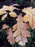 норвежские древесины Стоковая Фотография RF