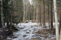 Нордический лес во время весны стоковые фотографии rf