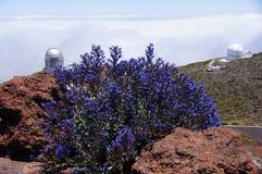 Нордическое - атомный - Herschel Стоковые Фото