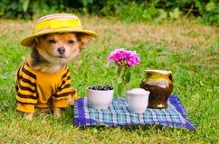 носить костюма лужка шлема собаки ослабляя Стоковые Изображения