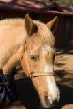 носить носа лошади проводки Стоковые Изображения