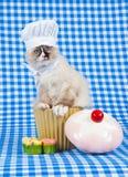 носить обмундирования котенка пирожнй шеф-повара стоковые фотографии rf