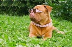 носить пинка травы стекел собаки ворота стоковые фотографии rf