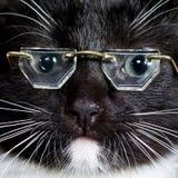 носить стекел кота Стоковые Фото