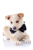 носить тесемки s щенка шеи Стоковое Фото