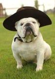 носить шлема бульдога английский Стоковое Фото