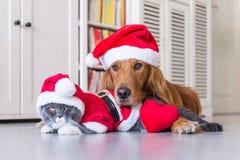 Носить шляпу рождества собак и кошек стоковые фото