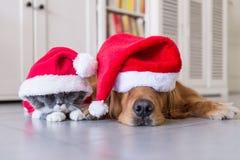 Носить шляпу рождества собак и кошек стоковые фотографии rf
