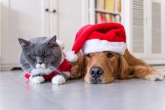 Носить шляпу рождества собак и кошек стоковые изображения