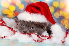 носить santa котенка шлема Стоковые Изображения