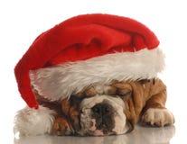 носить santa шлема собаки стоковые изображения