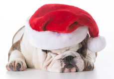 носить santa шлема собаки стоковое фото