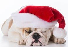 носить santa шлема собаки стоковое фото rf