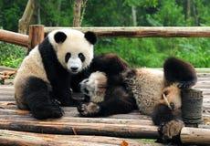носит играть гигантской панды Стоковые Изображения RF