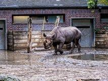 Носорог в Берлине Германии Стоковое Фото