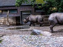 Носорог в Берлине Германии Стоковое фото RF