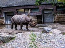 Носорог в Берлине Германии Стоковая Фотография