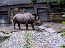 Носорог в Берлине Германии Стоковое Изображение RF