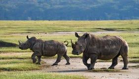Носорог 2 в саванне Национальный парк вышесказанного стоковые изображения rf