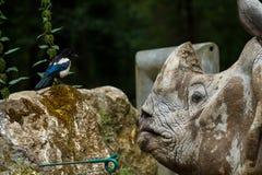 Носорог говоря к птице Стоковые Изображения RF