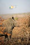 Носорог и вертолет Стоковые Фотографии RF