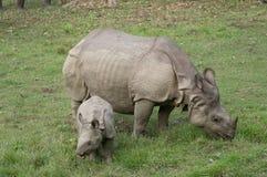 Носорог матери и младенца Стоковое Фото