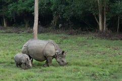 Носорог матери и младенца Стоковая Фотография RF