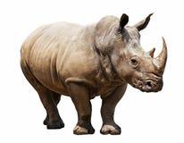 Носорог на белой предпосылке Стоковые Изображения