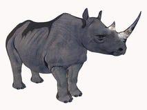 носорог шаржа Стоковое Изображение