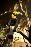носорог toucan Стоковые Изображения