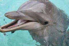 нос дельфина бутылки близкий вверх Стоковое Изображение