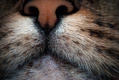 Нос кота стоковое фото