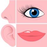 нос рта глаза уха собрания Стоковое Фото