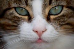 нос чувствительный Стоковые Фотографии RF