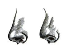 нос стоковое изображение
