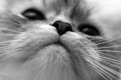 нос Стоковое Изображение RF