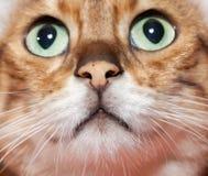 нос s рта кота близкий весьма вверх Стоковое Изображение