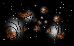 Ноча бабочки Стоковые Фотографии RF