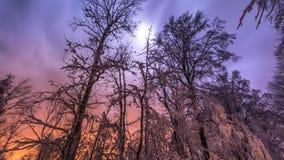 Ноча ветвей дерева Стоковое Изображение RF