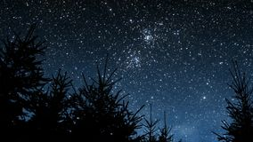 Ноча в древесинах сток-видео