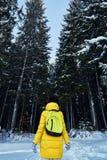 Ноча в темном лесе, прогулка девушки в древесинах перед рождеством Новый Год, предусматриванный в снеге Елевые сосны деревьев пре стоковые изображения
