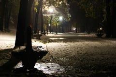 Ноча зимы в парке стоковое изображение
