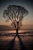 Ноча зимы Стоковые Фотографии RF