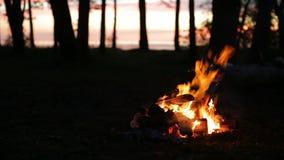 ноча конца горения костра вверх по древесине акции видеоматериалы