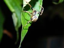 Ноча паука Стоковое фото RF