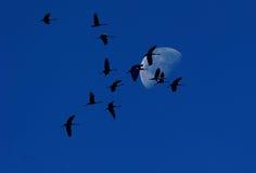 ноча полета Стоковая Фотография